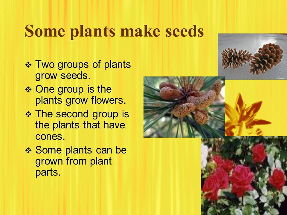 Some plants make seeds Two groups of plants grow seeds.