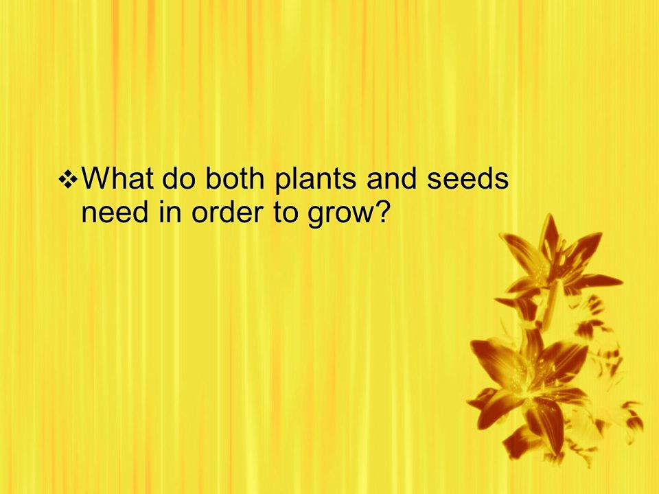 What do both plants and seeds need in order to grow