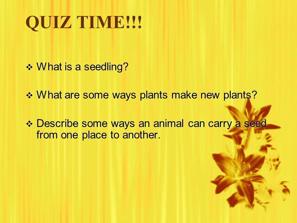 QUIZ TIME!!! What is a seedling
