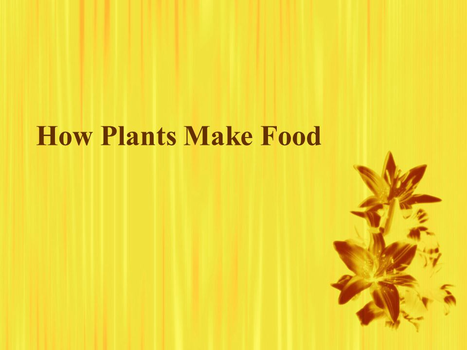 How Plants Make Food