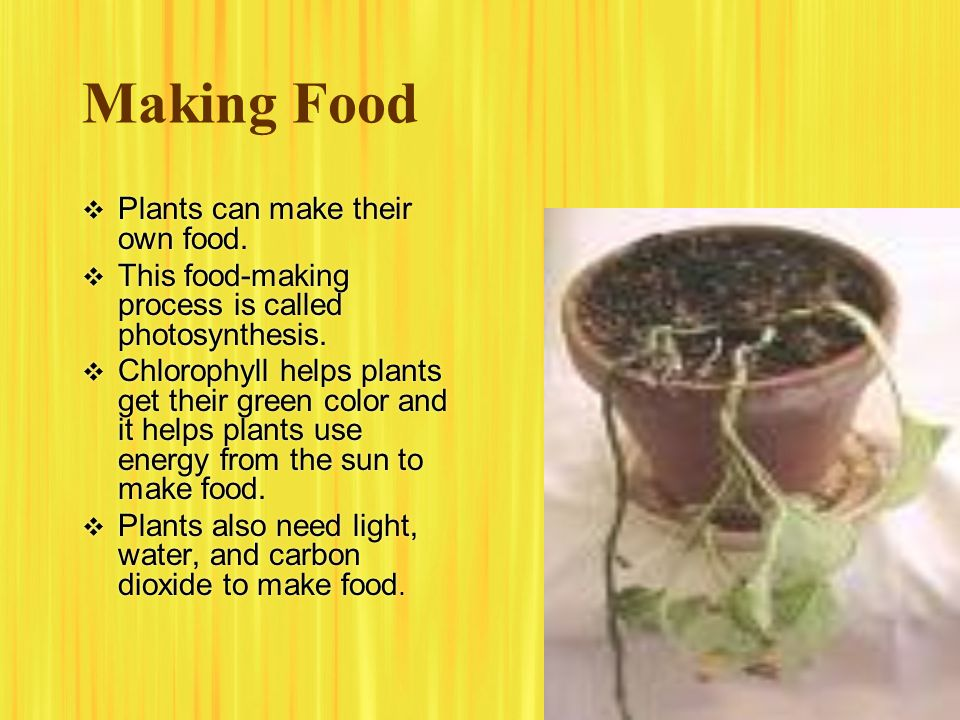 Making Food Plants can make their own food.