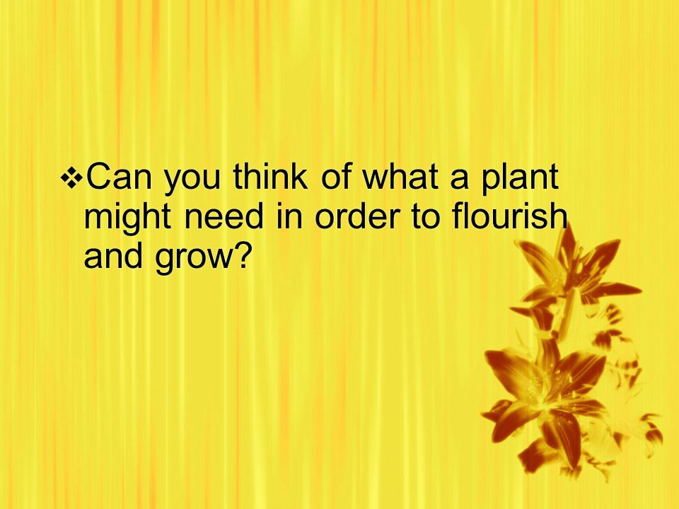 Can you think of what a plant might need in order to flourish and grow