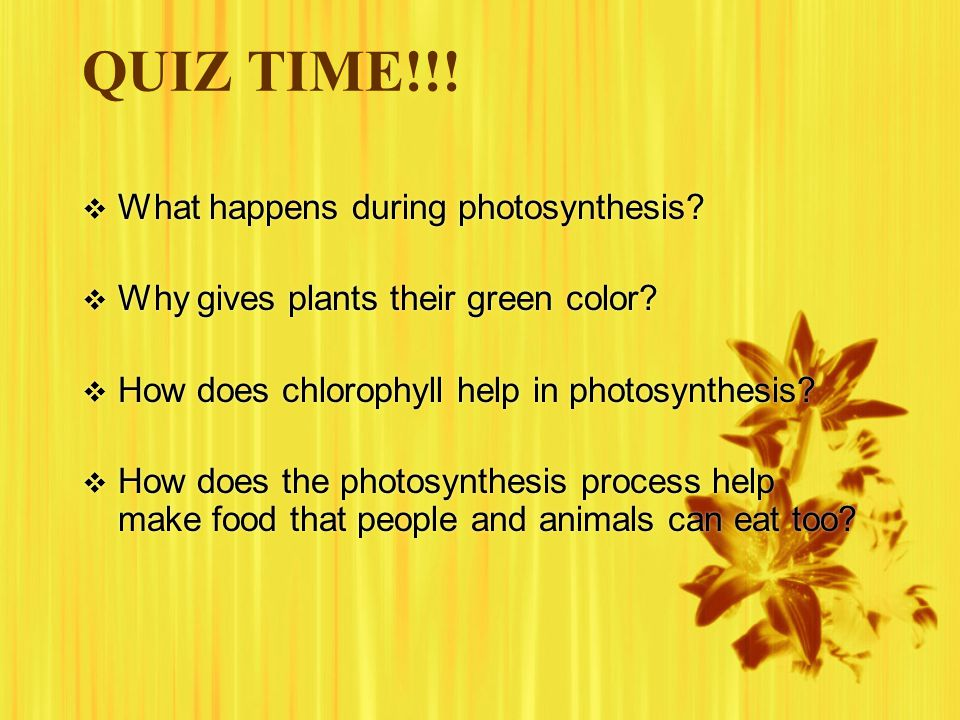 QUIZ TIME!!! What happens during photosynthesis