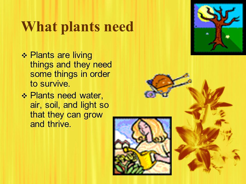What plants need Plants are living things and they need some things in order to survive.