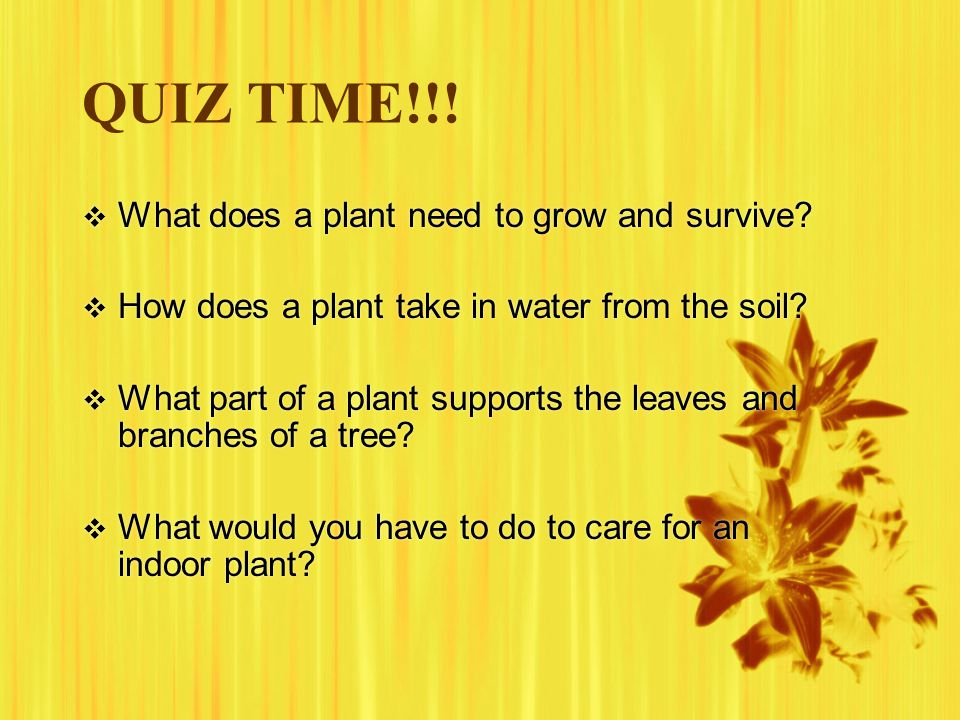 QUIZ TIME!!! What does a plant need to grow and survive
