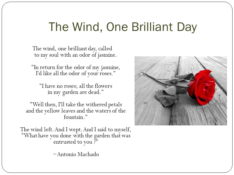 The Wind, One Brilliant Day