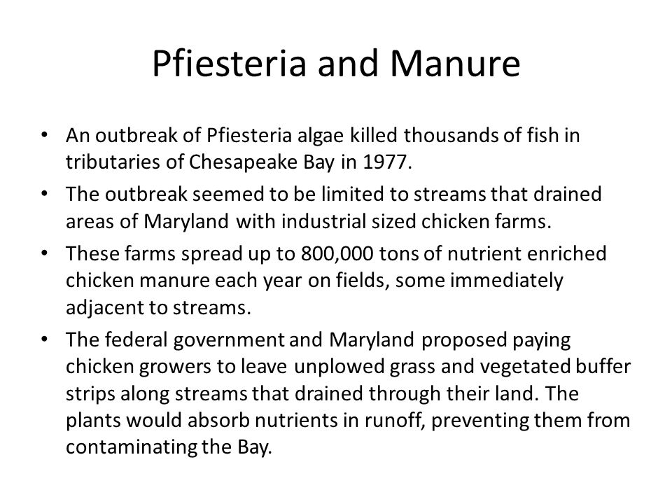 Pfiesteria and Manure An outbreak of Pfiesteria algae killed thousands of fish in tributaries of Chesapeake Bay in 1977.