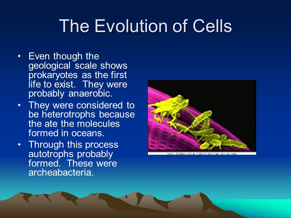 The Evolution of Cells Even though the geological scale shows prokaryotes as the first life to exist. They were probably anaerobic.