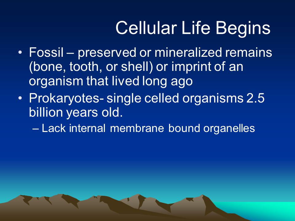 Cellular Life Begins Fossil – preserved or mineralized remains (bone, tooth, or shell) or imprint of an organism that lived long ago.