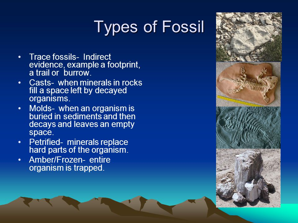 Types of Fossil Trace fossils- Indirect evidence, example a footprint, a trail or burrow.
