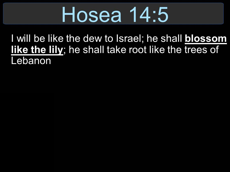 Hosea 14:5 I will be like the dew to Israel; he shall blossom like the lily; he shall take root like the trees of Lebanon.