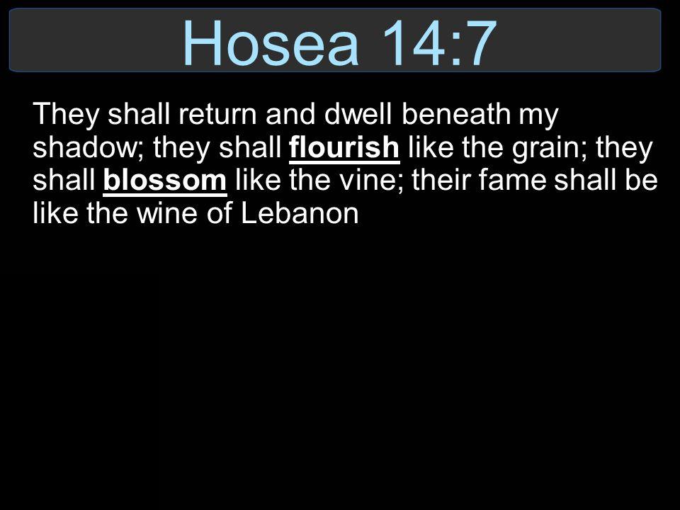 Hosea 14:7
