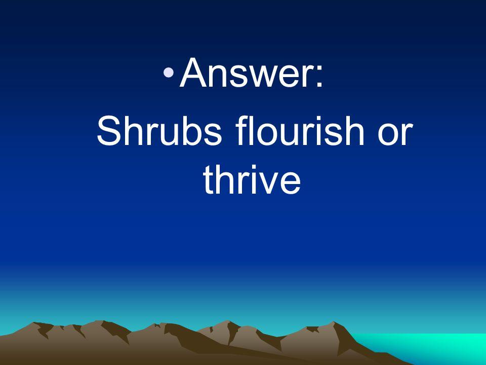 Shrubs flourish or thrive