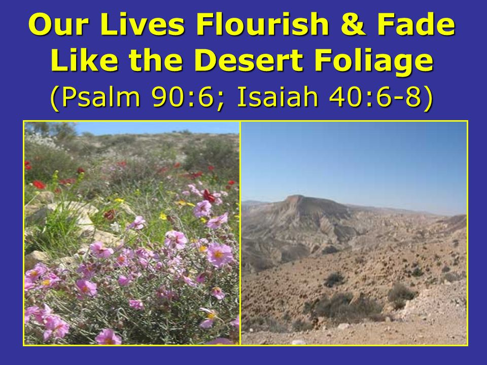 Our Lives Flourish & Fade Like the Desert Foliage (Psalm 90:6; Isaiah 40:6-8)