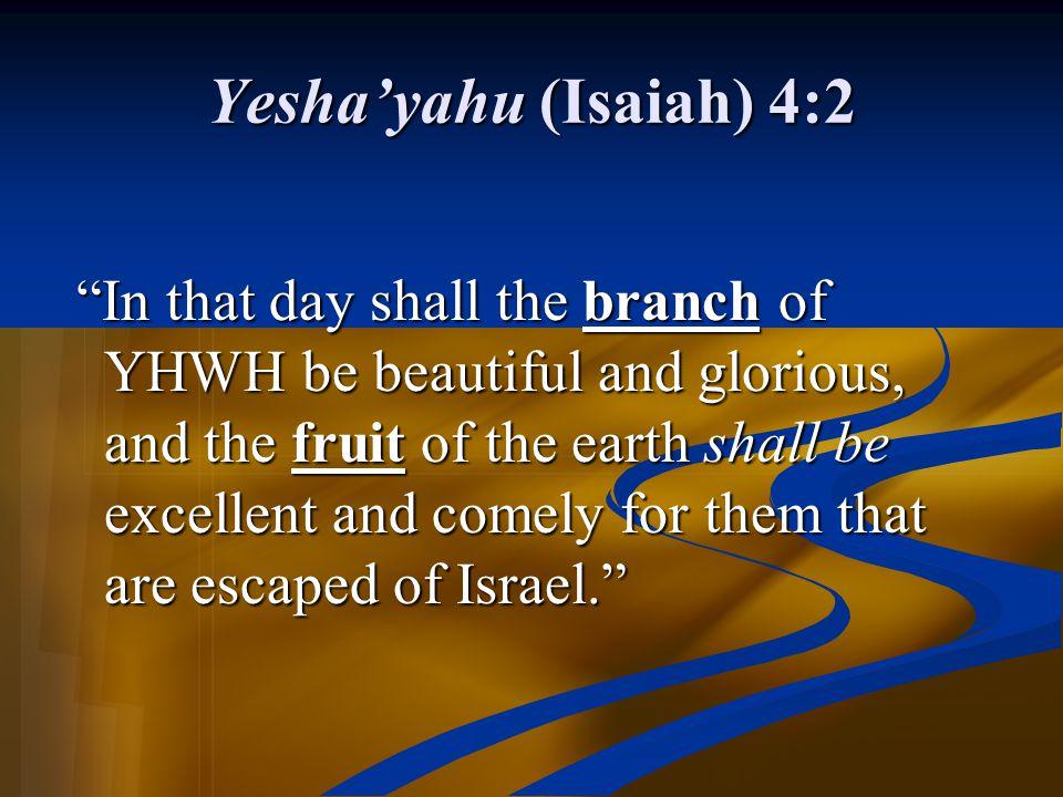Yesha'yahu (Isaiah) 4:2