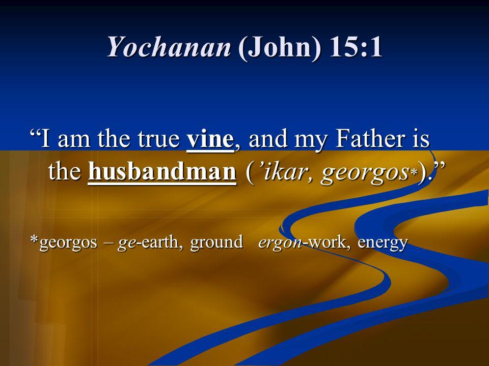 Yochanan (John) 15:1 I am the true vine, and my Father is the husbandman ('ikar, georgos*). *georgos – ge-earth, ground ergon-work, energy.