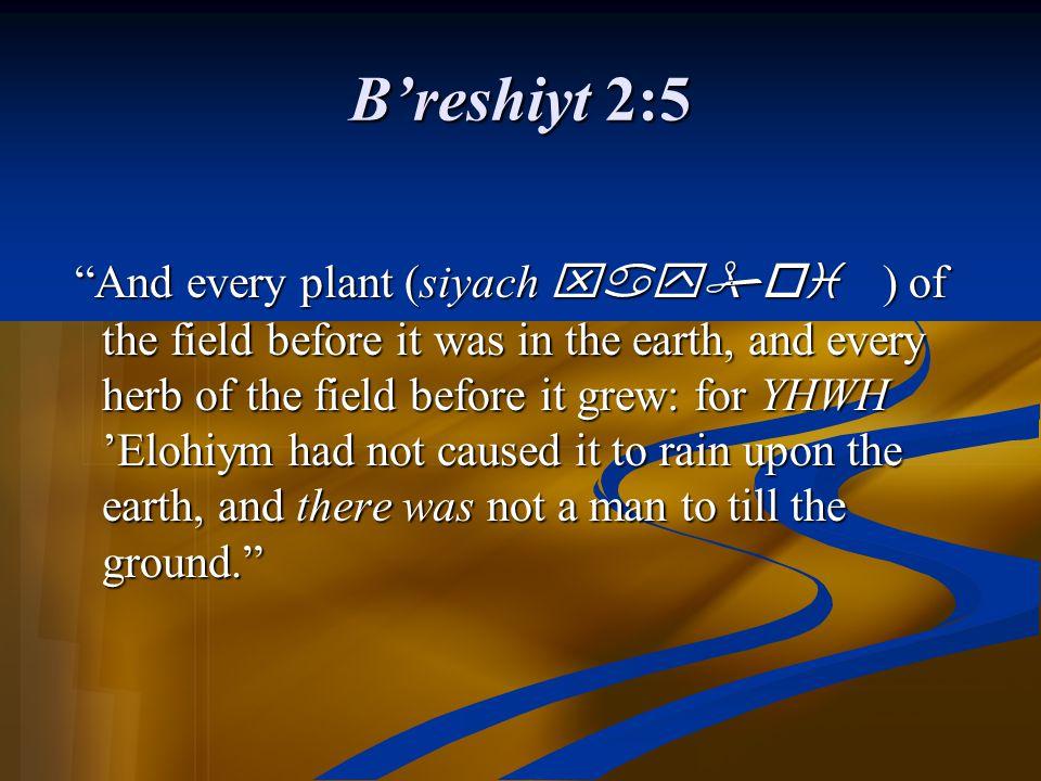 B'reshiyt 2:5