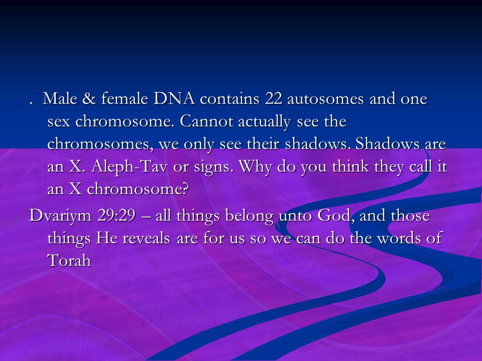 Male & female DNA contains 22 autosomes and one sex chromosome