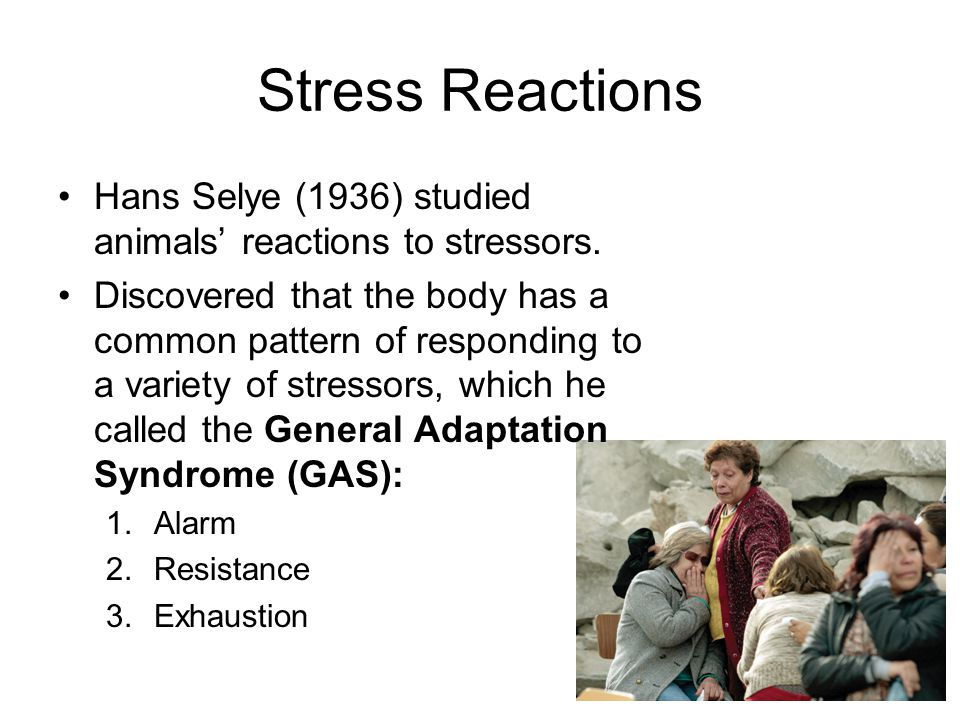Stress Reactions Hans Selye (1936) studied animals' reactions to stressors.