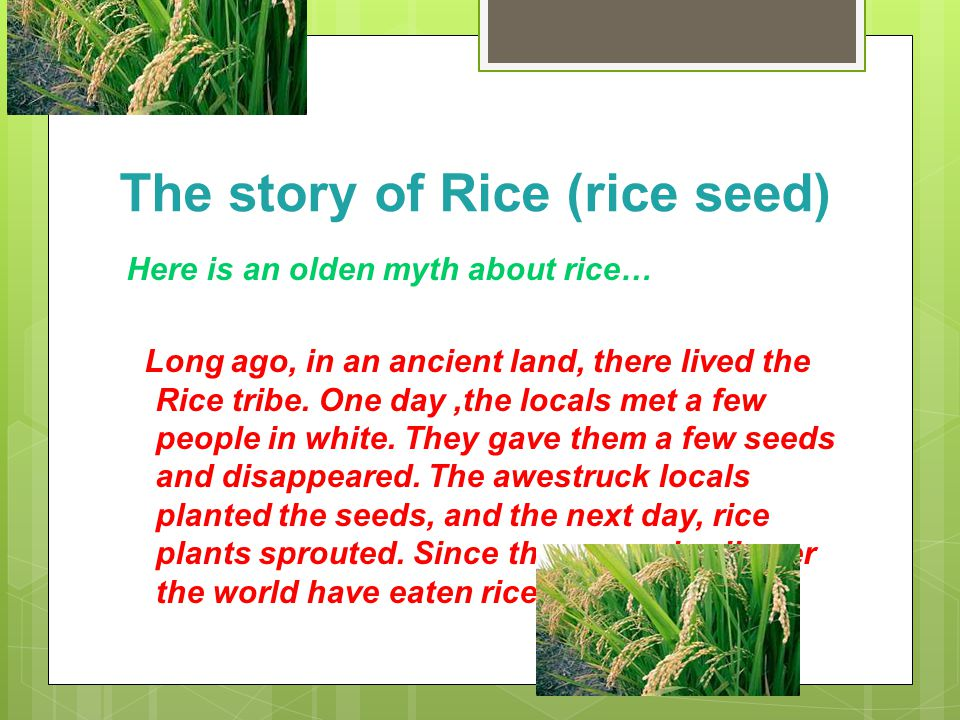 The story of Rice (rice seed)