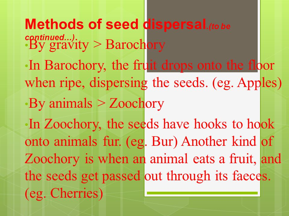 Methods of seed dispersal.(to be continued…)