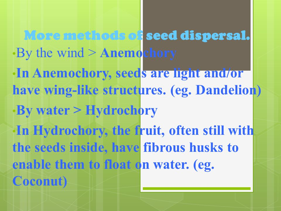 More methods of seed dispersal.