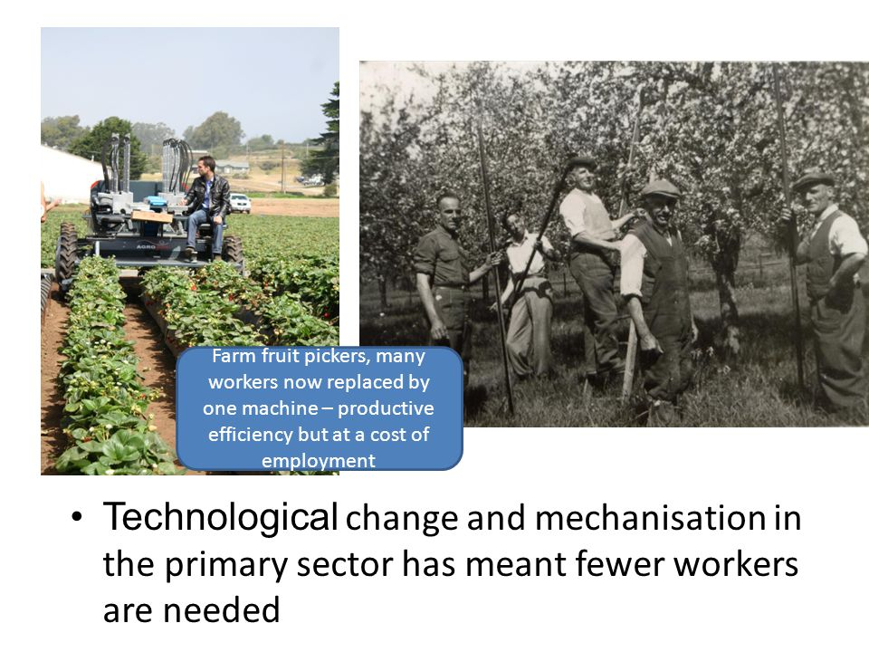 Farm fruit pickers, many workers now replaced by one machine – productive efficiency but at a cost of employment