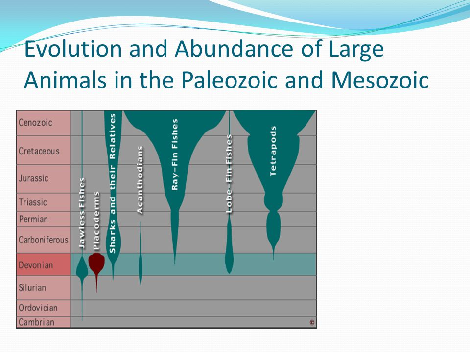 Evolution and Abundance of Large Animals in the Paleozoic and Mesozoic