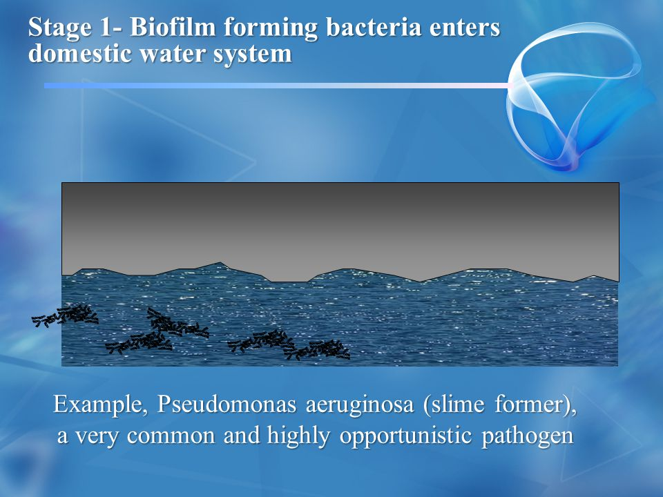Stage 1- Biofilm forming bacteria enters domestic water system