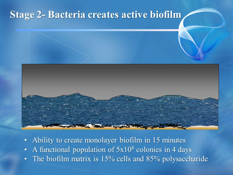 Stage 2- Bacteria creates active biofilm
