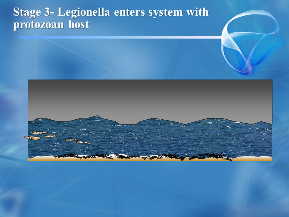 Stage 3- Legionella enters system with protozoan host