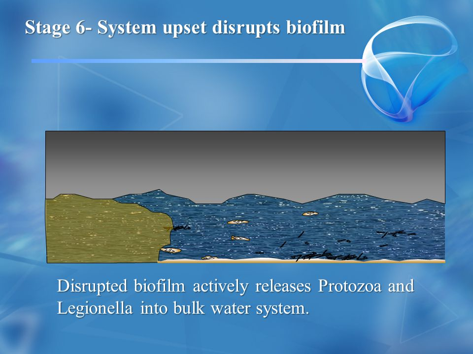 Stage 6- System upset disrupts biofilm