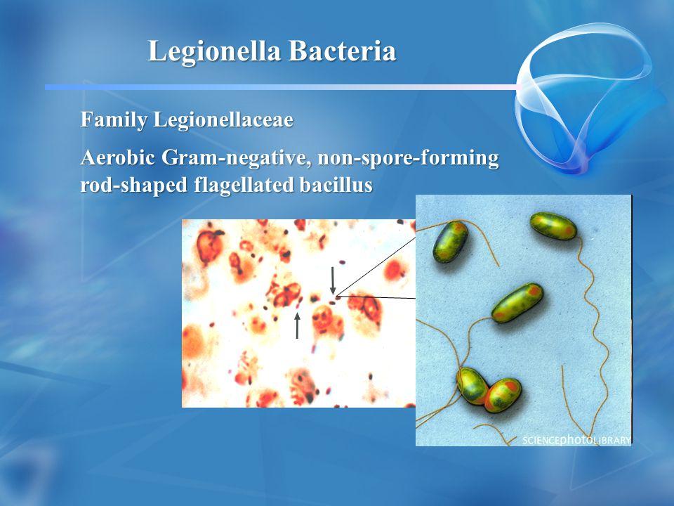 Legionella Bacteria Family Legionellaceae