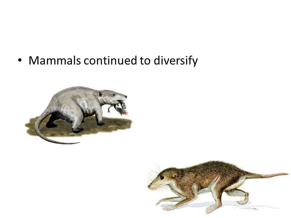 Mammals continued to diversify
