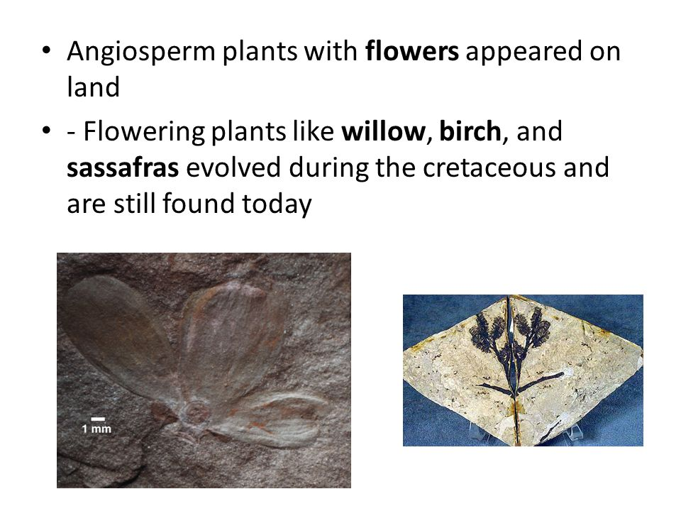 Angiosperm plants with flowers appeared on land