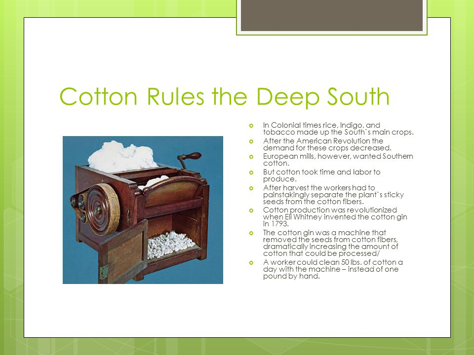 Cotton Rules the Deep South