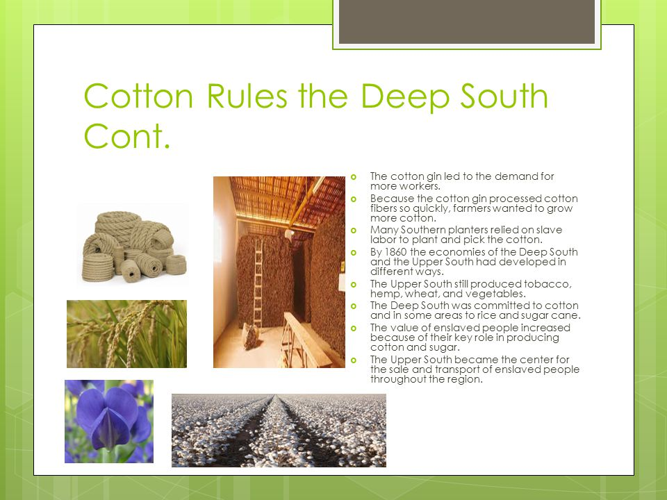 Cotton Rules the Deep South Cont.