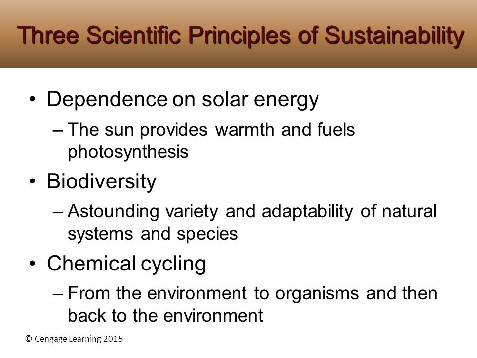 Three Scientific Principles of Sustainability