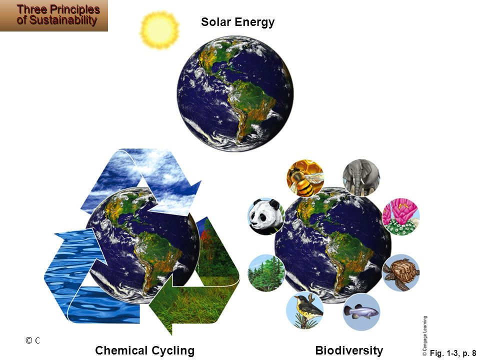 Solar Energy Chemical Cycling Biodiversity