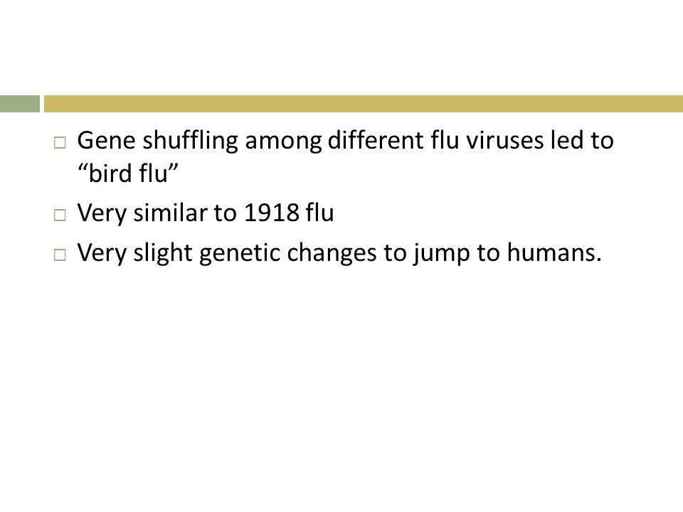 Gene shuffling among different flu viruses led to bird flu