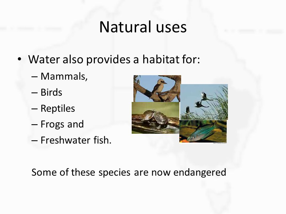 Natural uses Water also provides a habitat for: Mammals, Birds