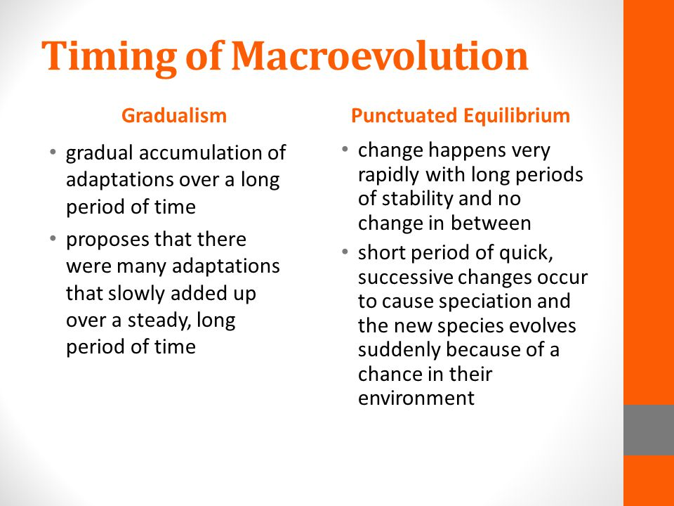 Timing of Macroevolution