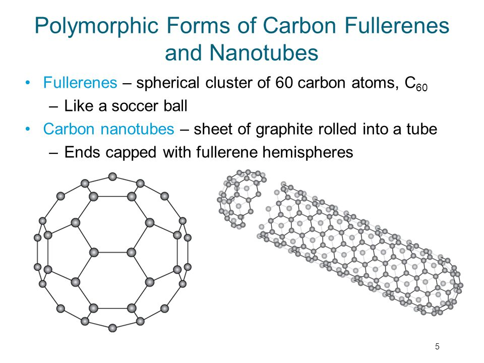 Polymorphic Forms of Carbon Fullerenes and Nanotubes