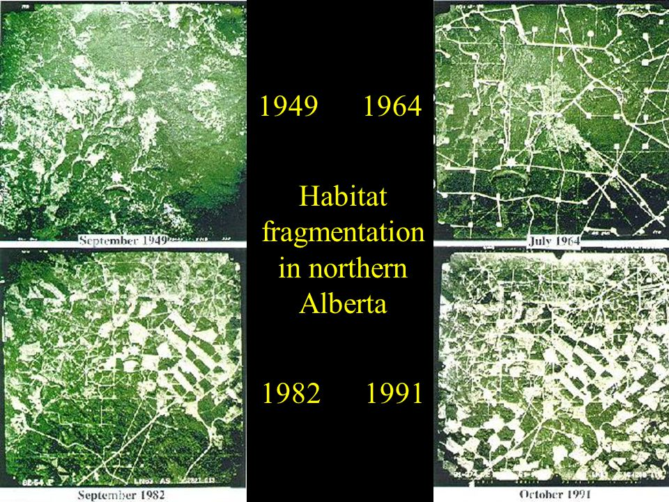 Habitat fragmentation in northern Alberta