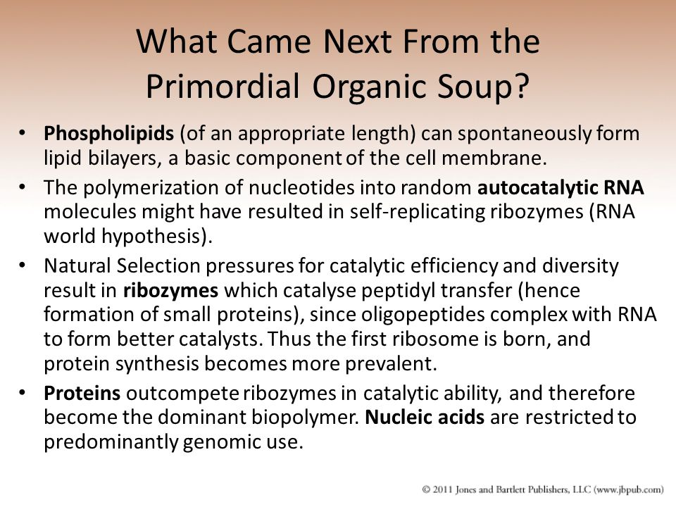 What Came Next From the Primordial Organic Soup