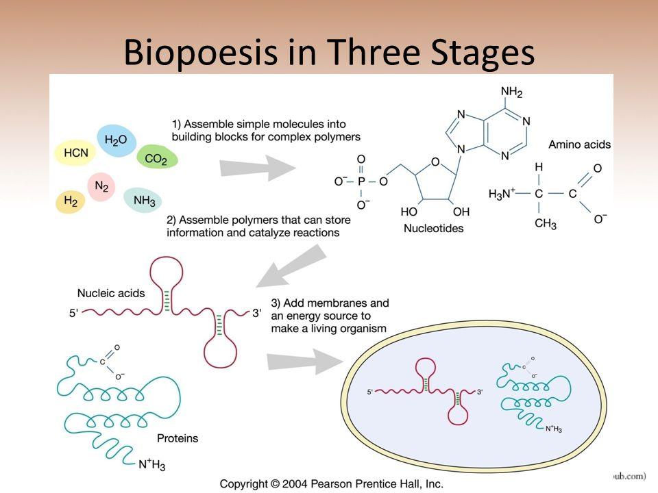 Biopoesis in Three Stages