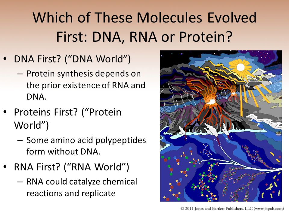 Which of These Molecules Evolved First: DNA, RNA or Protein
