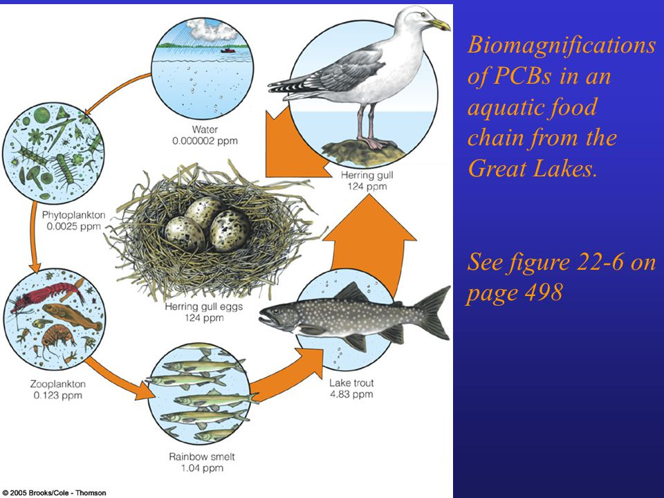 Biomagnifications of PCBs in an aquatic food chain from the Great Lakes.