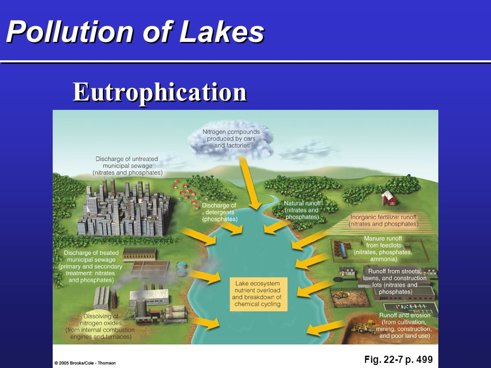 Pollution of Lakes Eutrophication Fig. 22-7 p. 499