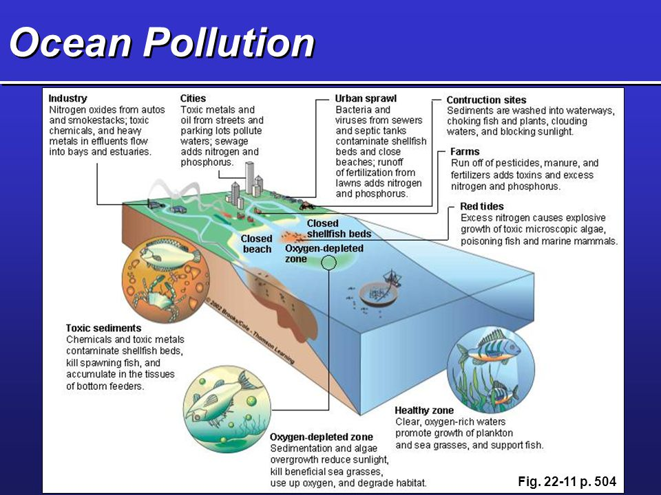 Ocean Pollution Fig. 22-11 p. 504